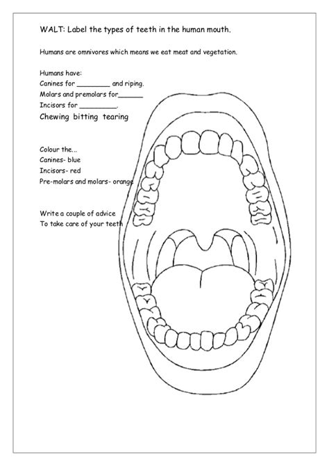 diagram of a tooth to label teeth labelling