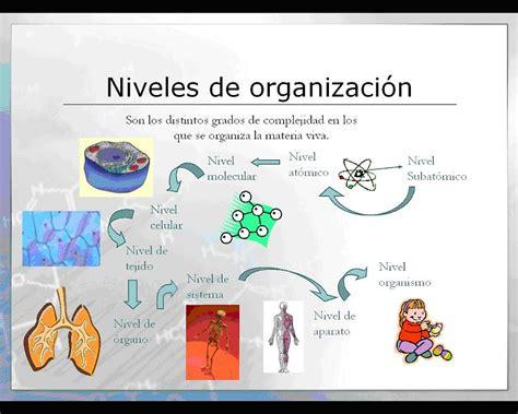 trascender los niveles de biologia los niveles de organizaci 243 n
