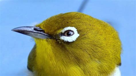 are birds color blind reference
