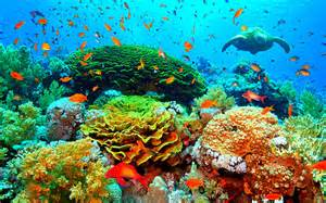 Beautiful coral reefs wallpaper scuba ing coral reef wallpaper