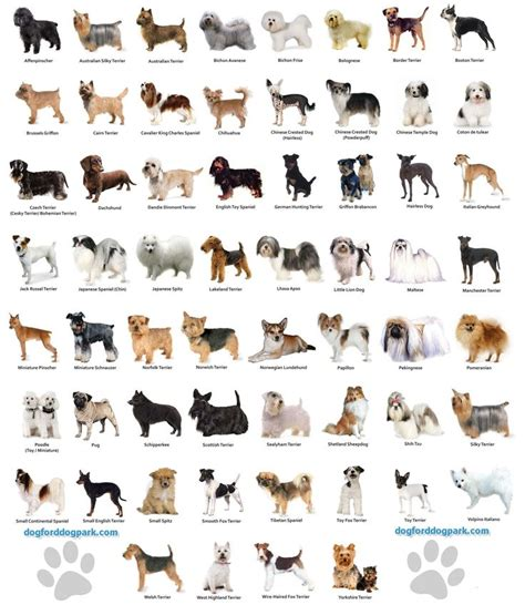 breeds species small breeds chart jaddid hd wallpapers backgrounds images photos