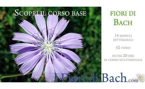 corso fiori di bach on line evento corso base on line sui fiori di bach quantic