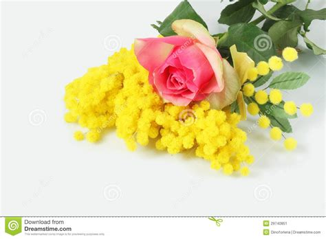 imagine fiori and mimosa stock image image of petal gift