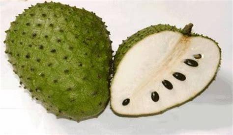 Shower Chop Fruit by Soursop Annona Muricata