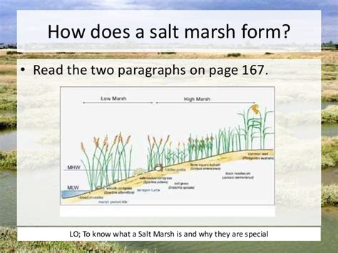 what does a salt l do l11 salt marshes ap
