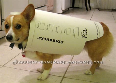 starbucks puppy latte starbucks costume easy and inexpensive