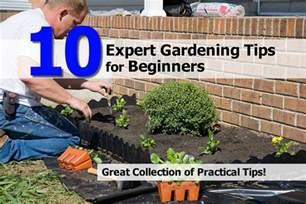 Gardening For Beginners 10 Expert Gardening Tips For Beginners