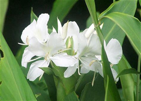 produce fiori in spighe vivaivalverde