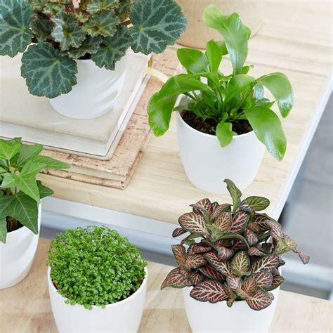 buy terrarium plant collection bottle garden terrarium