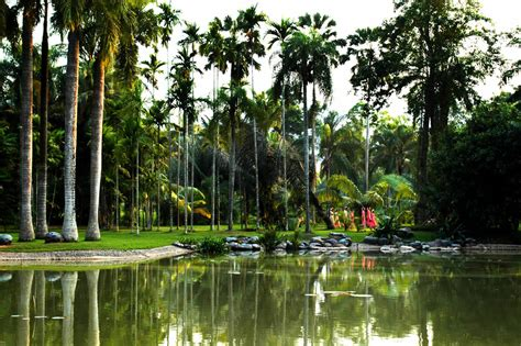 Tropical Botanical Garden Tropical Botanical Garden In Menglun Travel China With Me