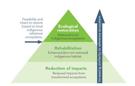 ecological restoration practice  based