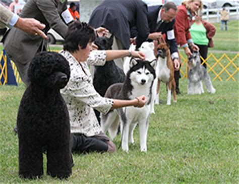 Akc Events Calendar American Kennel Club Events
