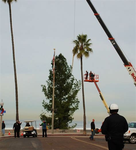 cut christmas tree san diego san diego community news community tree arrives to set stage for the holidays