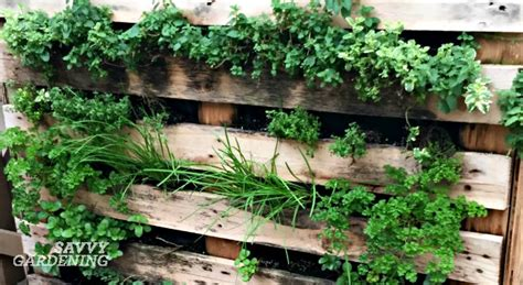 Vertical Vegetable Garden Ideas Vertical Vegetable Garden Ideas