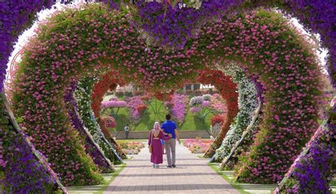 largest botanical garden in world miracle garden in dubai world s largest botanical garden