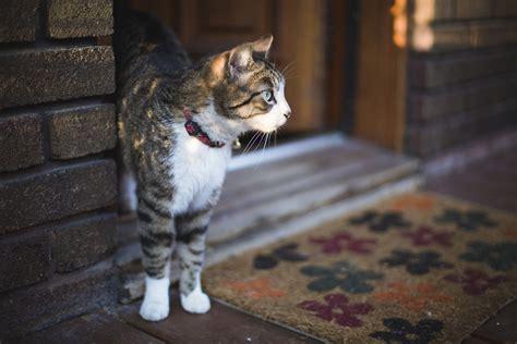 prevent cat door escape attempts