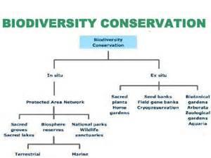 Biodiversity Essay Topics by Biodiversity Essay Writing
