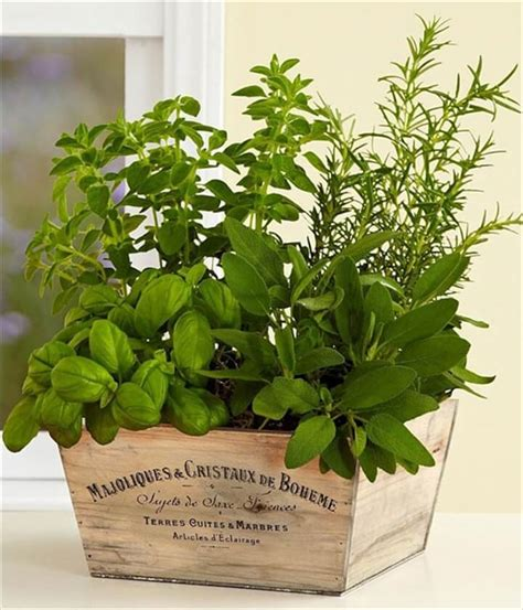 herb garden indoor herb gardens to practice your green thumb with diy to make