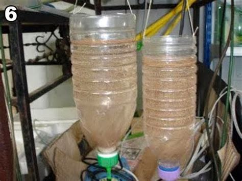 Artemia Untuk Pakan Ikan artemia pakan larva lele pengganti cacing
