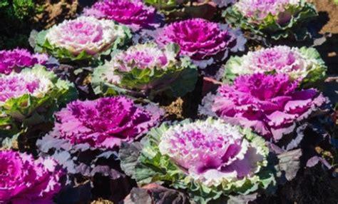 piante autunnali fiorite fiori autunnali 6 piante colorano l autunno leitv