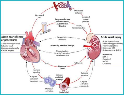 renal failure renal disease signs and symptoms benefits of binge