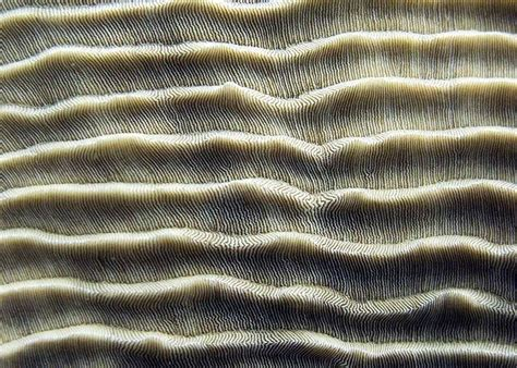 natural pattern pinterest 26 best images about natural patterns on pinterest
