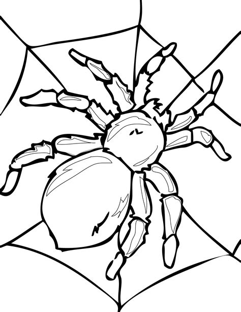 coloring pages birds and insects spider coloring part 3