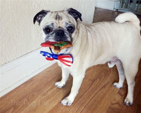 patriotic pug patriotic pug