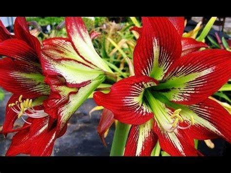 imagenes bellas rosas y bellas flores quot lindas im 225 genes de fantas 237 a y mas