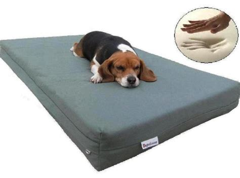 Superior Petsmart Dog Beds #7: Foam-dog-bed.jpg
