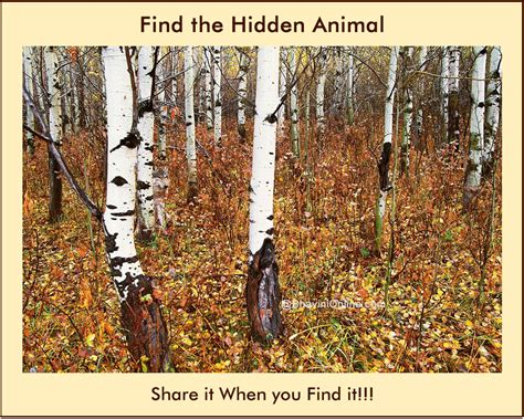 Find In The Picture Riddle Find The Animal In The Forest 2