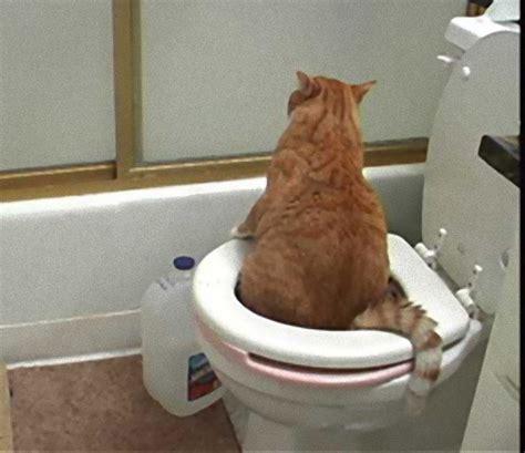 cat pooping in bathtub 哺乳類なら体の大きさに関係なくおしっこにかかる時間は約21秒 米研究 カラパイア