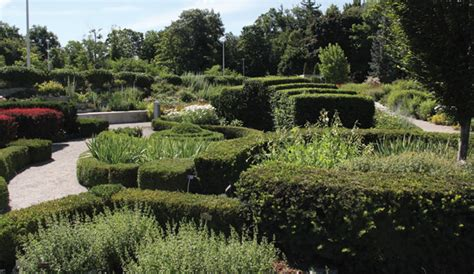 beryl ivey knot garden toronto botanical gardentoronto