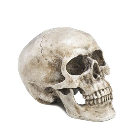 home decor skulls decorative skull head wholesale at koehler home decor