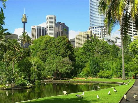 garden sydney 17 best images about sydney botanic garden on