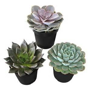 home depot succulents succulents cactus plants garden plants flowers