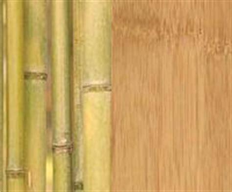 Bamboo Flooring  Is It Really Treehugger Green?   TreeHugger