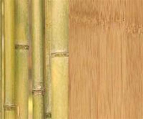 Bamboo Flooring  Is It Really Treehugger Green?   TreeHugger