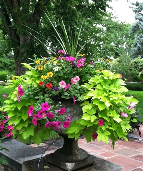 better homes and gardens container gardening garden containers on container garden