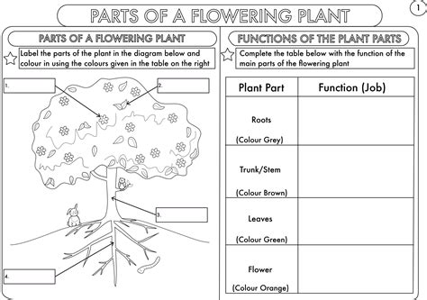 free science worksheets for year 4 year 3 and 4 science worksheets with complimentary posters