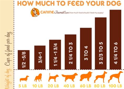 8 week puppy feeding schedule top 8 best puppy feeding guides what to feed a puppy how much schedule
