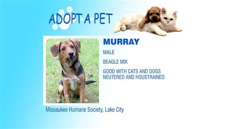 adopt a puppy michigan 373 best images about adopt a pet on bo duke county and