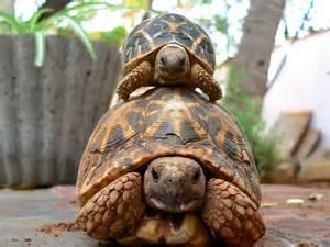 how to wake your hibernating pet tortoise