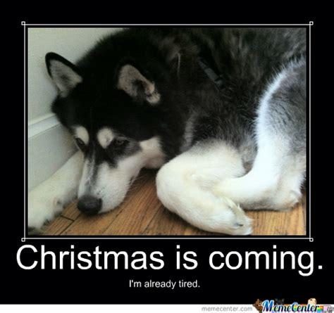 Christmas Animal Meme - welcome to memespp com
