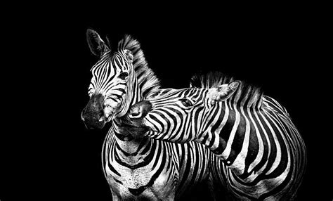 fotos en blanco y negro espectaculares fotograf 237 a en blanco y negro la gu 237 a m 225 s completa