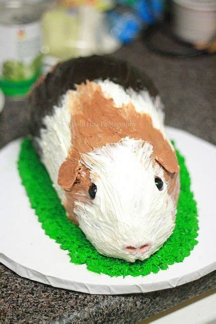 easy  animal cakes   occasion
