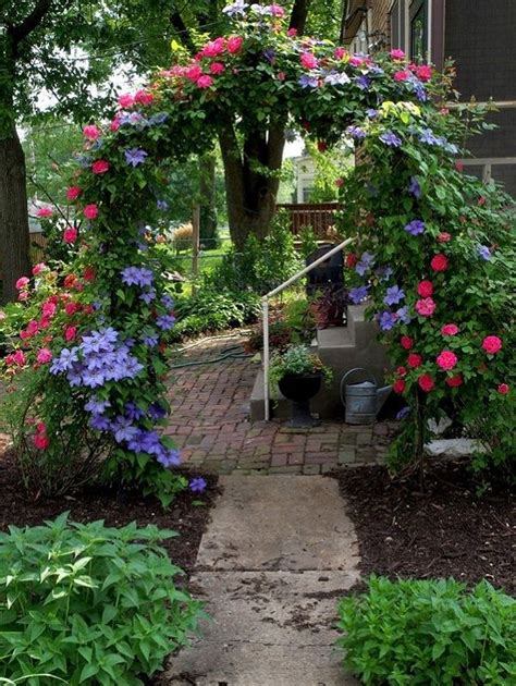arch for climbing plants all you need to about growing clematis in your garden