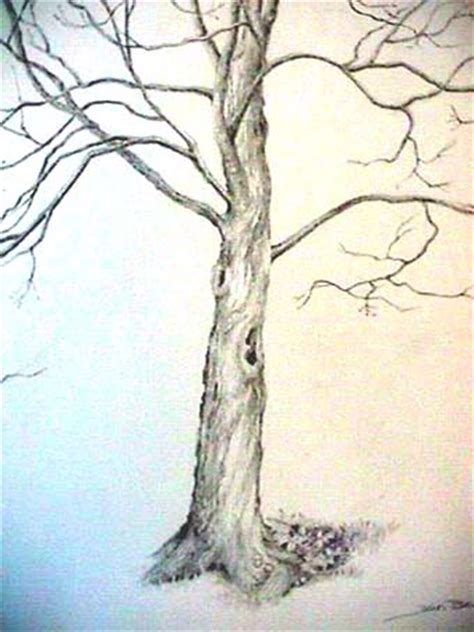 maple tree drawing joan berg victor drawing quot solitary maple quot item 503301