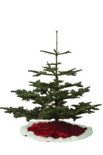 Best Christmas Tree Species » Home Design 2017