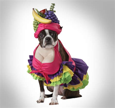 Awesome Cooking Gadgets by Cha Cha Cha Dog Costume